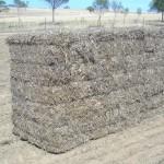 Big Square Bale